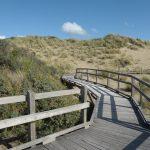 Sentier de la dune parabolique (10)