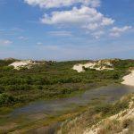 Sentier de la dune parabolique (2)