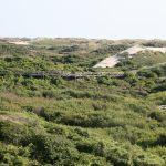 Sentier de la dune parabolique (4)